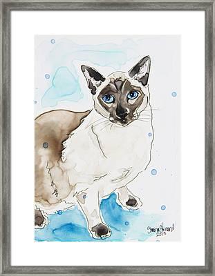 Blue Point Siamese Framed Print by Shaina Stinard