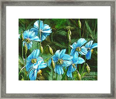Blue Poppies Framed Print by Dorinda K Skains