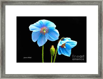 Blue Poppy Flowers # 4 Framed Print by Jeannie Rhode