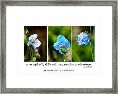 Blue Poppies Poster Framed Print by Marion McCristall
