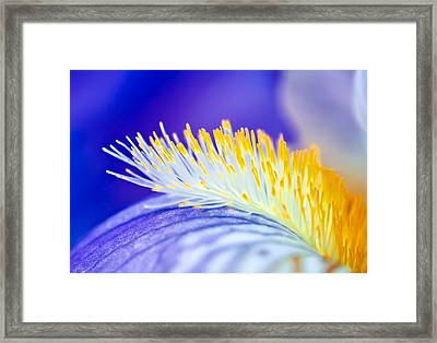 Blue Rapsody Framed Print
