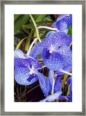 Blue Rapture Framed Print by Barb Baker