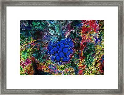 Blue Raspberry Framed Print
