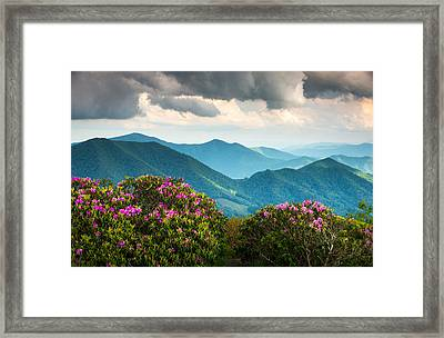 Blue Ridge Appalachian Mountain Peaks And Spring Rhododendron Flowers Framed Print by Dave Allen