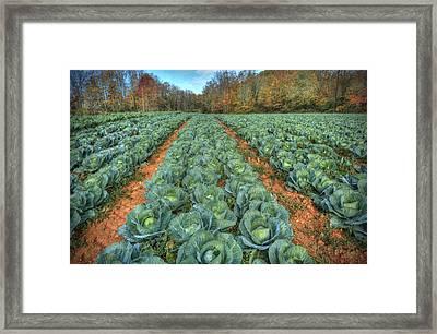 Blue Ridge Cabbage Patch Framed Print by Jaki Miller
