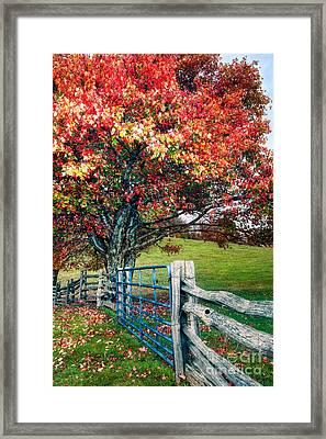 Blue Ridge - Fall Colors - Autumn Maple Tree Fence Gate I Framed Print by Dan Carmichael