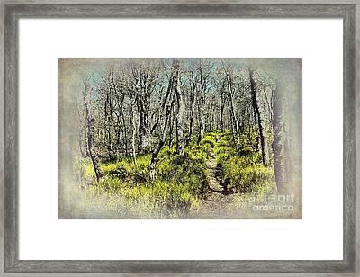 Blue Ridge Mountains Hiking Trail II Framed Print by Dan Carmichael