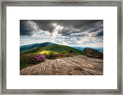Blue Ridge Mountains Landscape - Roan Mountain Appalachian Trail Nc Tn Framed Print by Dave Allen