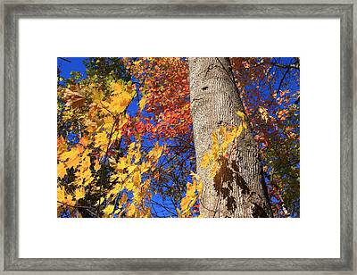 Framed Print featuring the photograph Blue Ridge Parkway Fall Foliage-north Carolina by Mountains to the Sea Photo