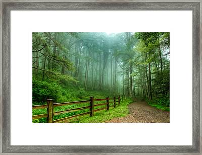 Blue Ridge Parkway - Foggy Country Road And Trees II Framed Print by Dan Carmichael