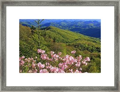 Framed Print featuring the photograph Blue Ridge Parkway Rhododendron Bloom- North Carolina by Mountains to the Sea Photo
