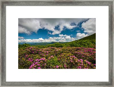 Blue Ridge Parkway Spring Flowers - Spring In The Mountains Framed Print by Dave Allen