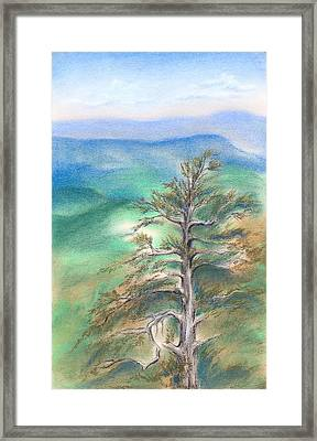 Blue Ridge Pine Framed Print