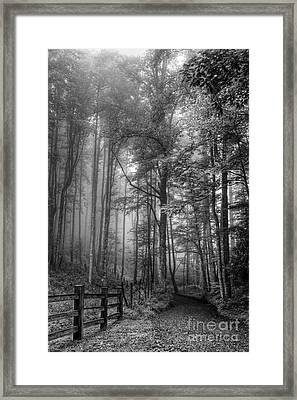 Blue Ridge - Trees In Fog Country Road Framed Print by Dan Carmichael