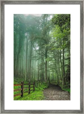 Blue Ridge - Trees In Fog Country Road II Framed Print