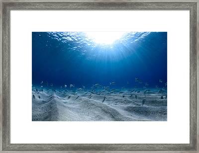 Blue Ridges Framed Print
