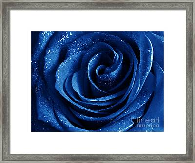 Blue Roses Pictures Framed Print by Boon Mee