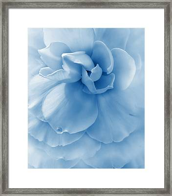 Blue Ruffled Begonia Flower Framed Print by Jennie Marie Schell
