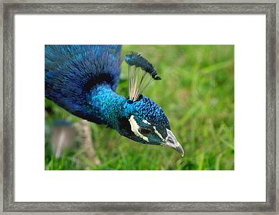Blue Framed Print by Sarah Boyd