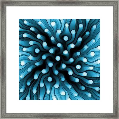 Blue Sea Anemone Framed Print by Anastasiya Malakhova