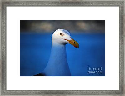 Blue Seagull Framed Print by Debra Thompson