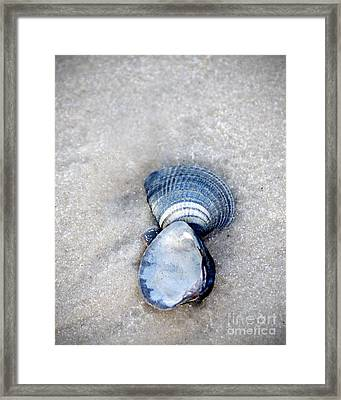 Blue Seashells Framed Print