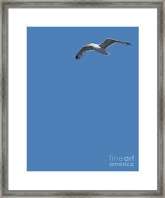 Blue Series 001 Framed Print by Rob Snow