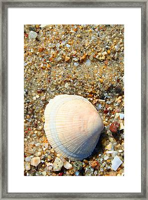 Framed Print featuring the photograph Blue Shell by Dick Botkin