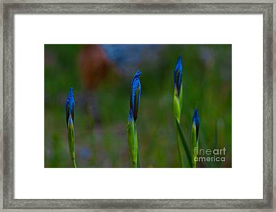 Blue Sisters Framed Print