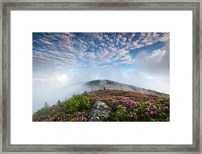 Blue Skies Above Catawba Rhododendron In The Roan Mountain Highlands Framed Print by Mark VanDyke