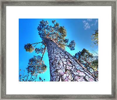 Blue Skies Above Framed Print by Gill Billington