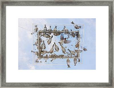 Blue Skies Above The Bird Feeder Framed Print by Tim Grams