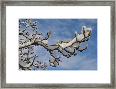 Blue Skies In Winter Framed Print by Bill Cannon