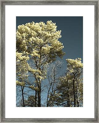 Blue Skies Framed Print by Luke Moore