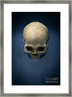 Blue Skull Framed Print by Edward Fielding