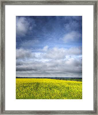 Blue Sky And Yellow Flowers Framed Print