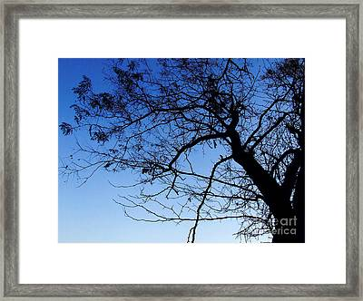 Framed Print featuring the photograph Blue Sky by Andrea Anderegg