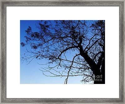 Blue Sky Framed Print by Andrea Anderegg