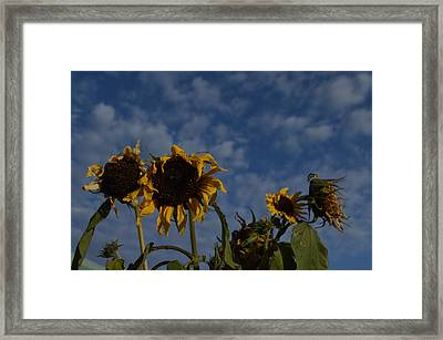 Framed Print featuring the photograph Blue Sky Buddies by Brian Boyle