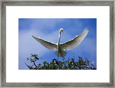 Blue Sky Landing Framed Print