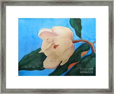 Blue Sky Magnolia Framed Print by Nancy Kane Chapman