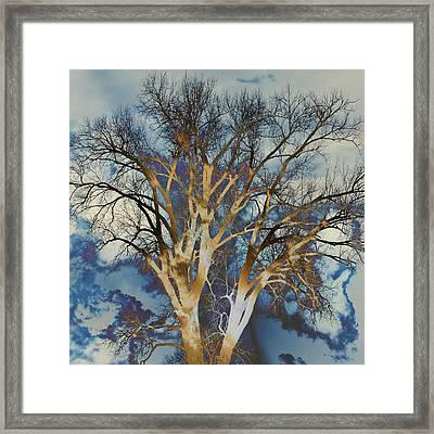 Blue Sky Tree Framed Print