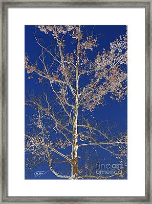 Blue Sky With A Twist Of Birch Framed Print