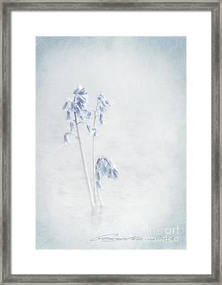 Blue Softness Framed Print