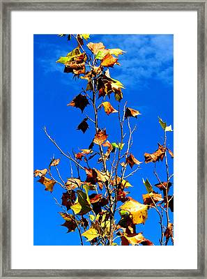 Framed Print featuring the photograph Blue Splash by David  Norman