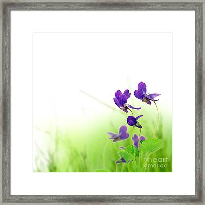 Blue Spring Flowers Framed Print by Boon Mee