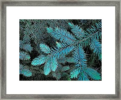 Framed Print featuring the photograph Blue Spruce by Daniel Thompson