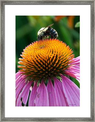 Blue Striped Bee Framed Print