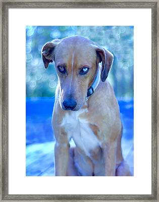 Blue Sulking Framed Print