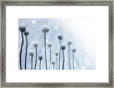 Blue Sunshine Framed Print by Lisa Knechtel